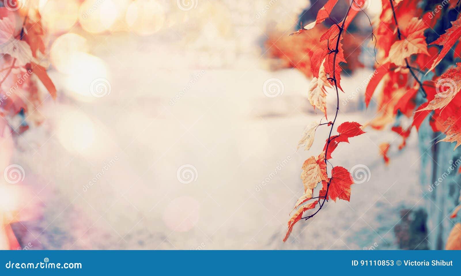 Folhas de outono vermelhas bonitas com luz do sol e bokeh, fundo exterior da natureza da queda