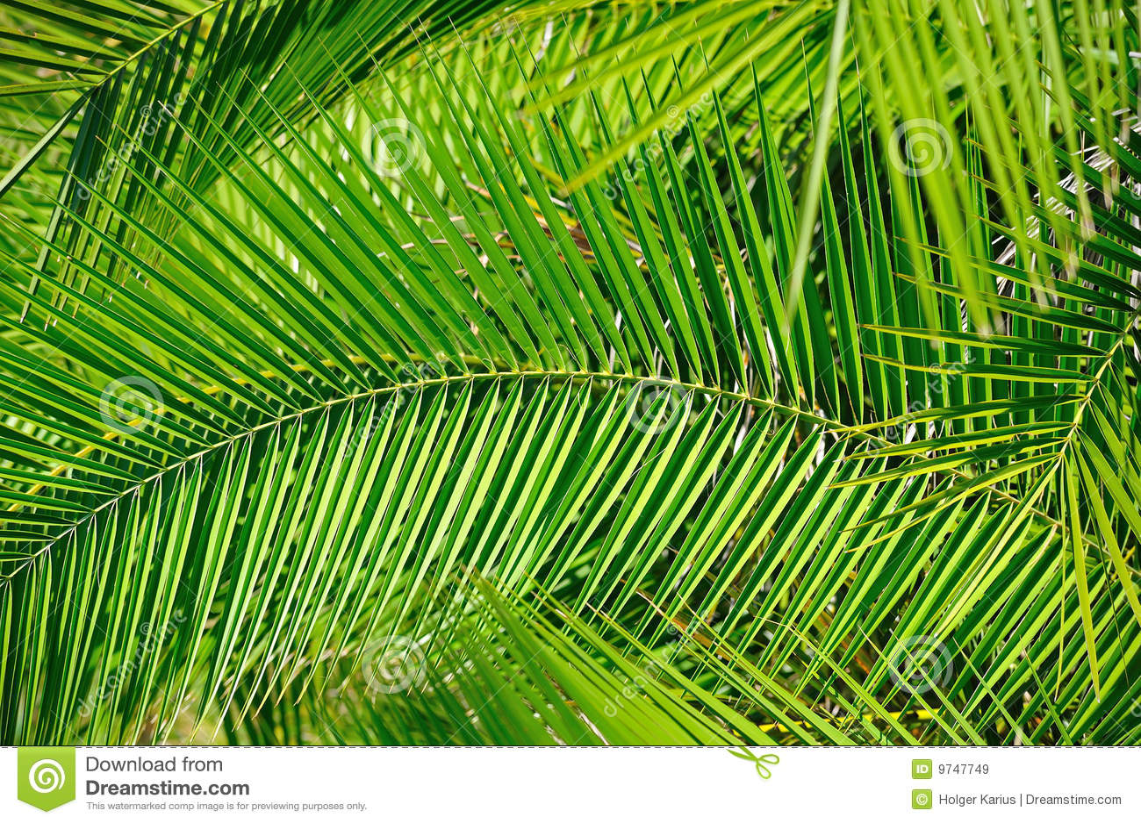 Folhas de palmeira (fundo)