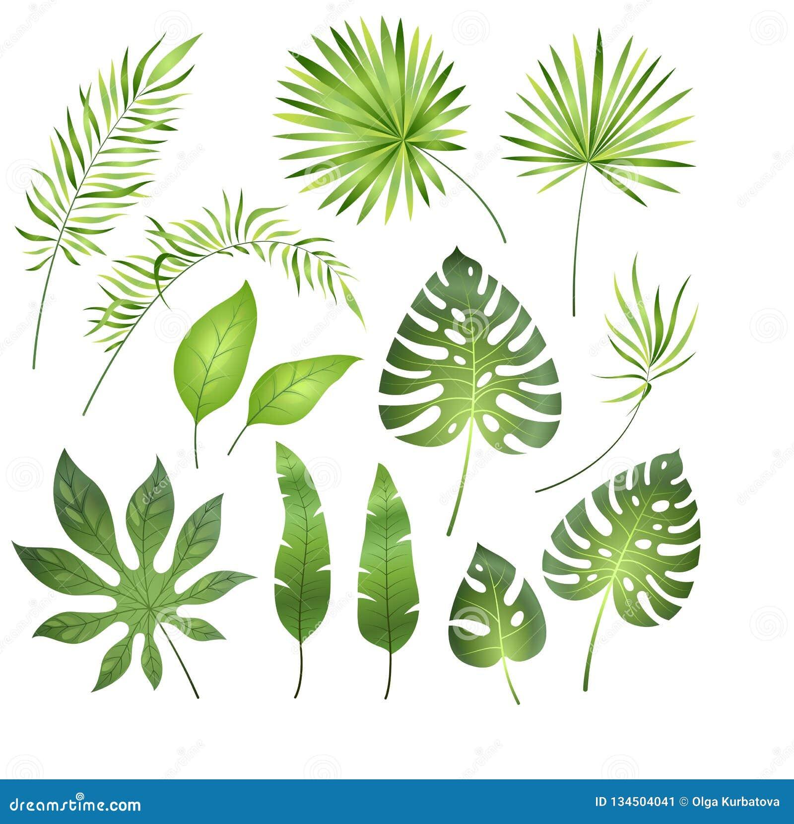 Folhas de palmeira tropicais Plumeria exótico da samambaia real da palma da folha da selva Feriado tropical da praia do paraíso d