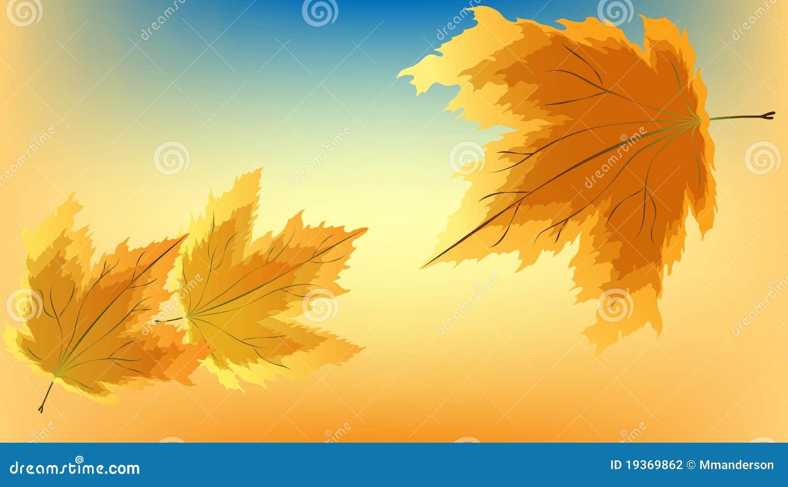 Folhas de plátano do outono
