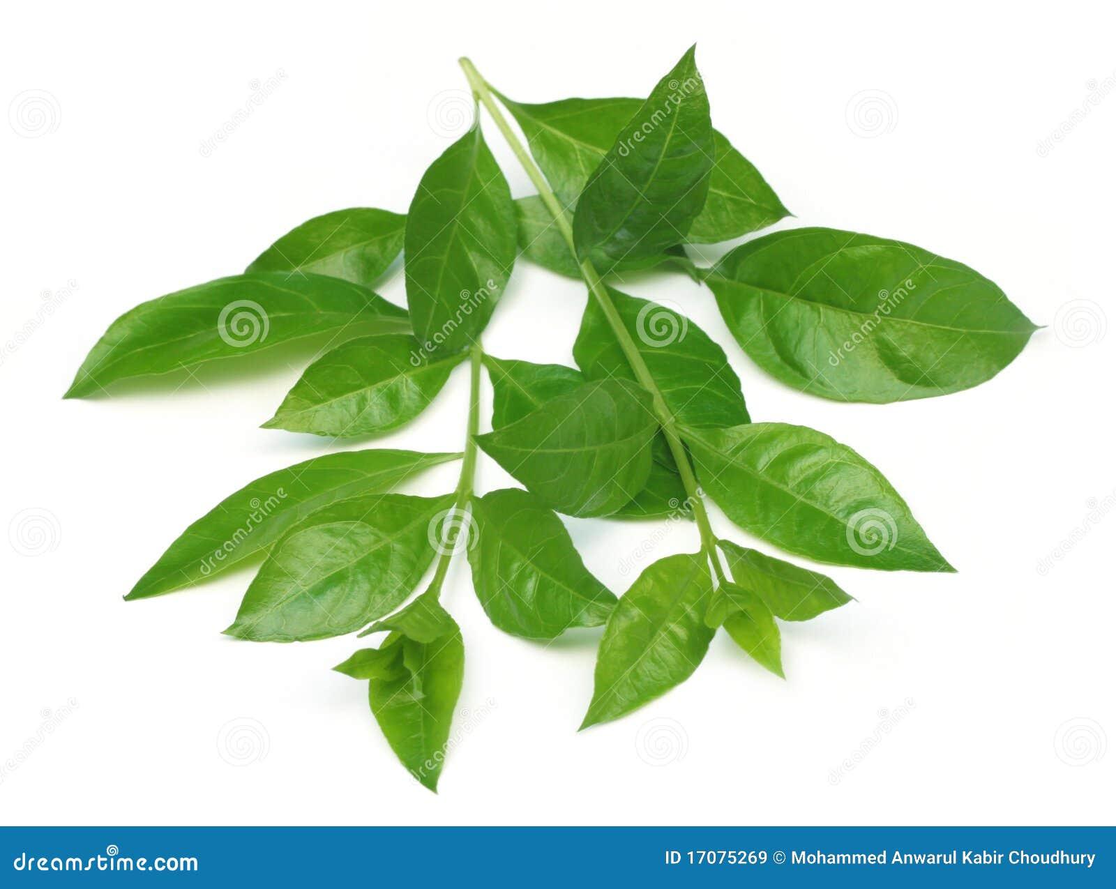 Folhas do Henna