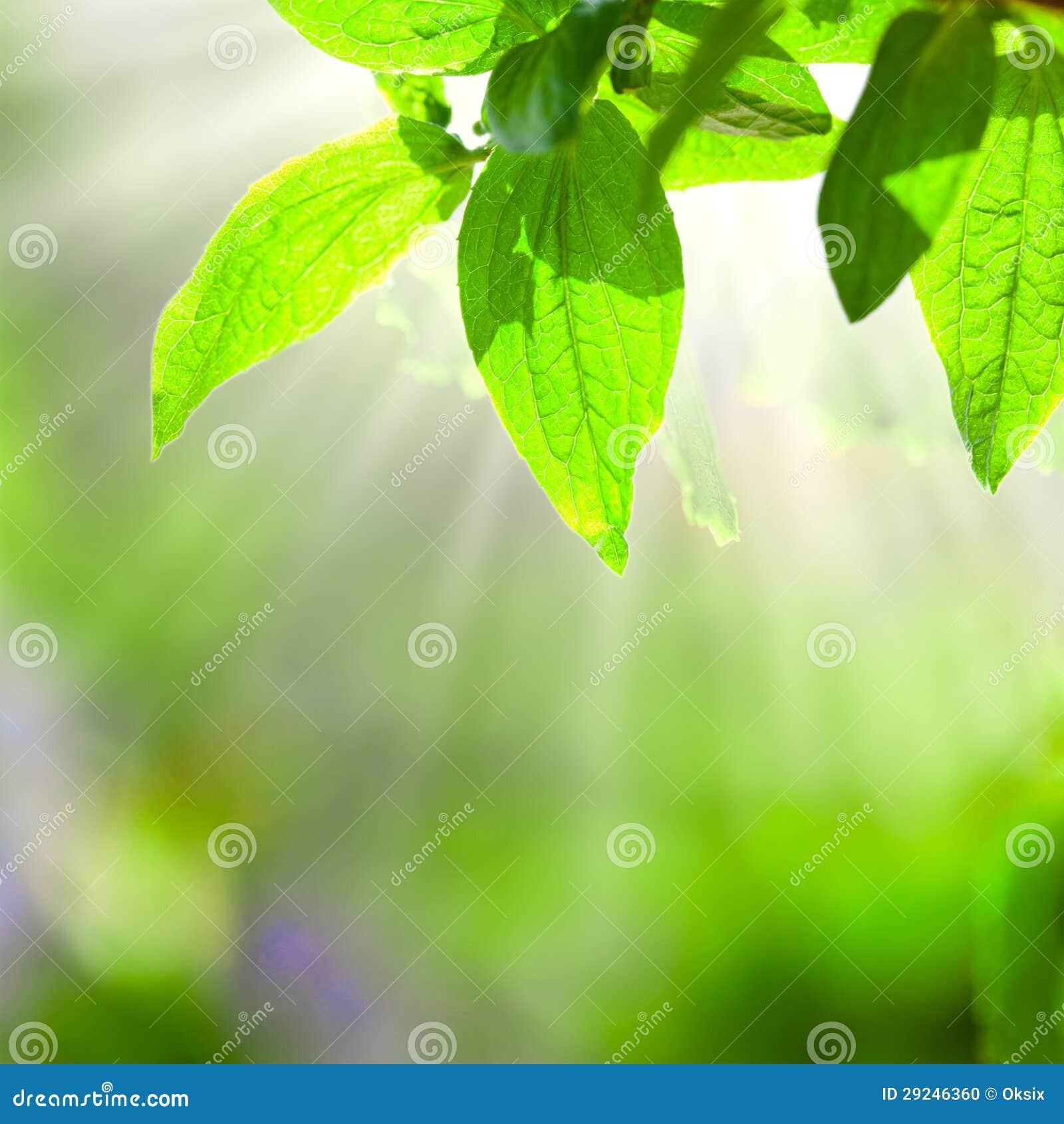 Download Folhas do verde foto de stock. Imagem de mágica, abstraction - 29246360