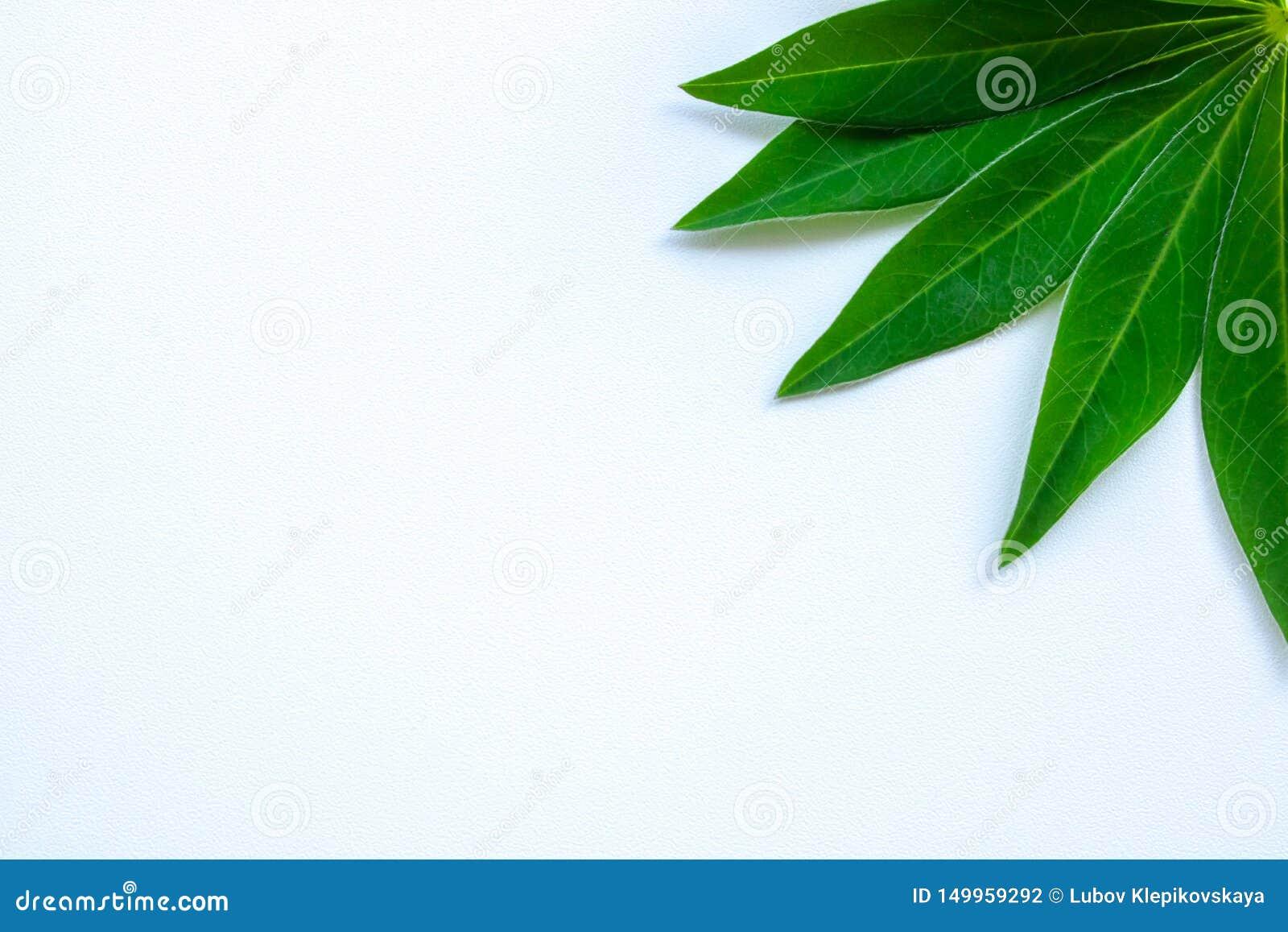 Folhas do verde do cartão em uma grama branca do fundo