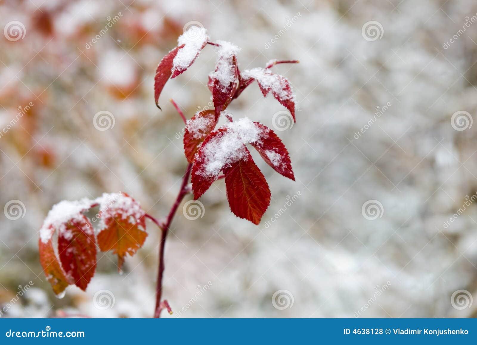 Folhas do vermelho
