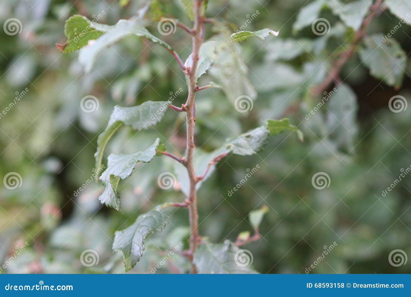 Folhas em um ramo de uma planta