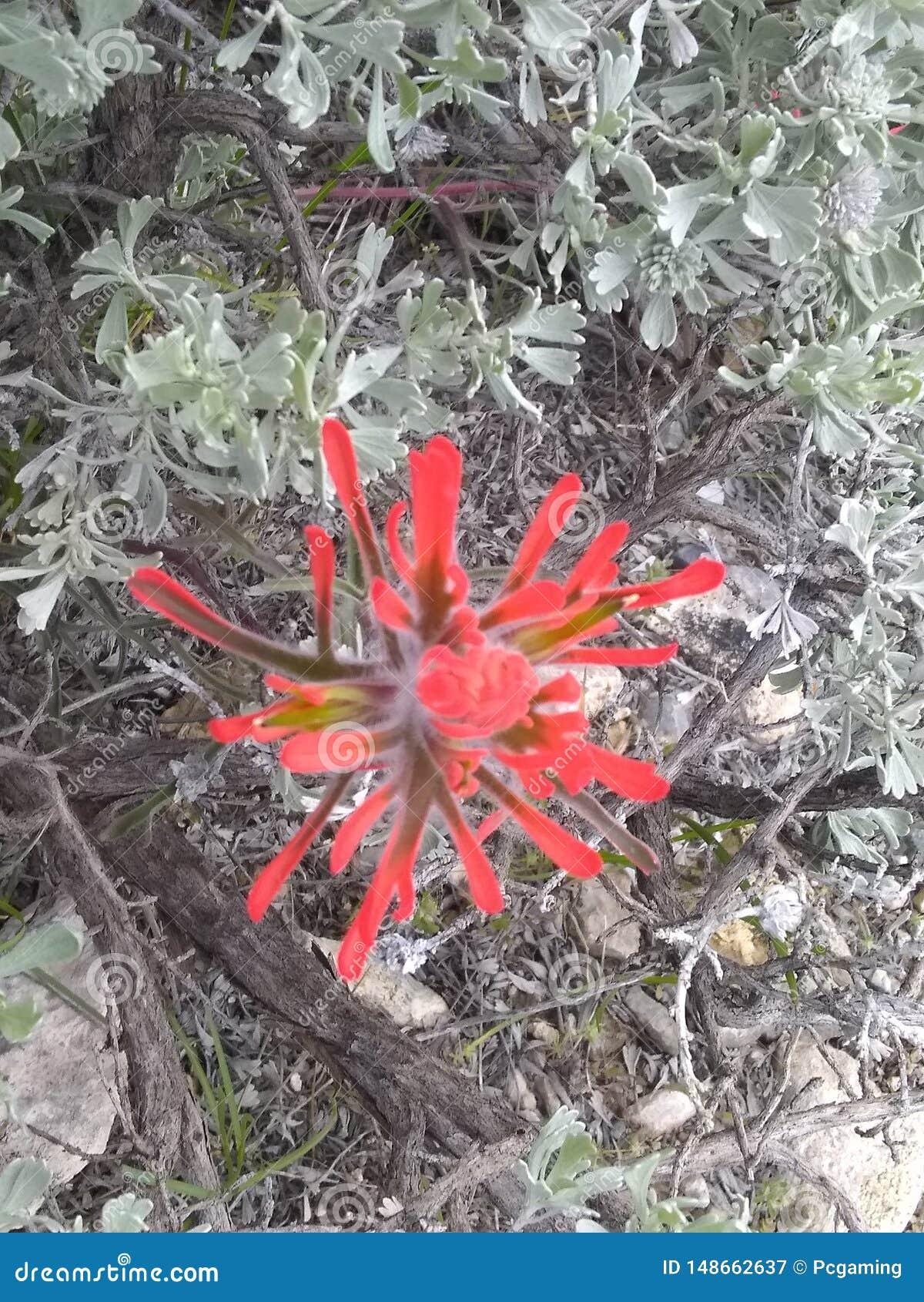 Folhas f do verde do pincel indiano