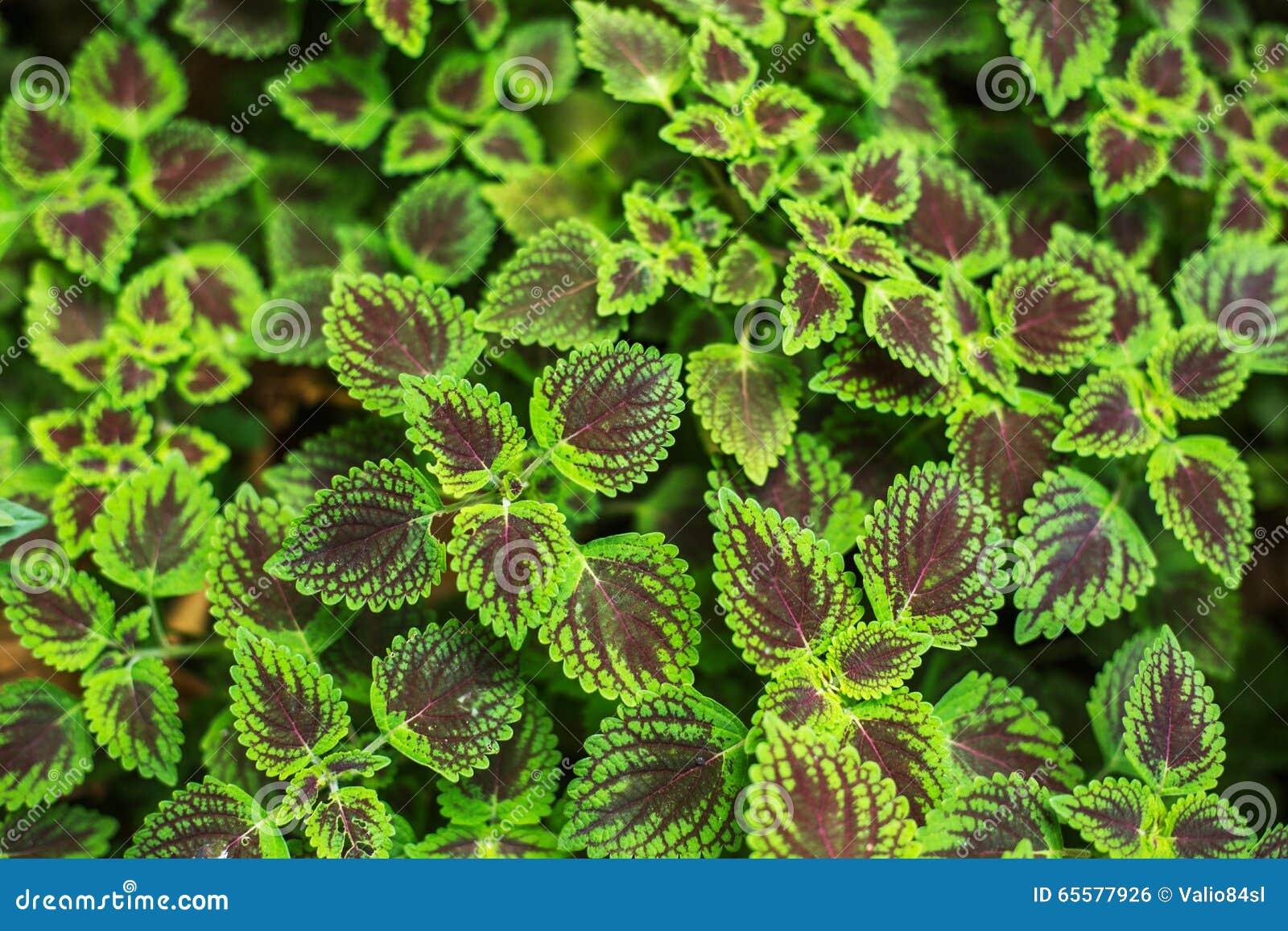Folhas frescas da planta no fundo do jardim