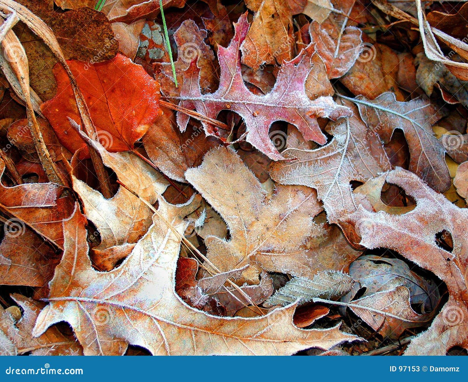 Folhas gelados