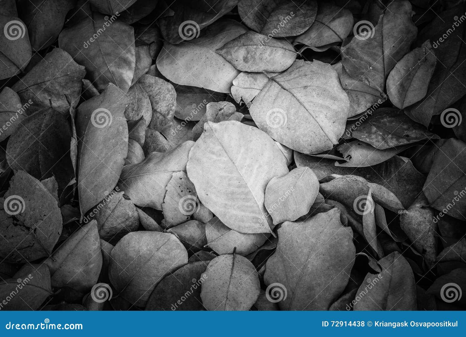 Folhas inoperantes para fundos e texturas, tom preto e branco