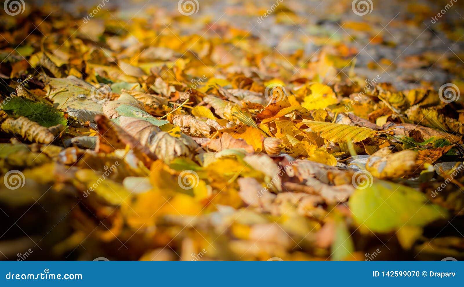 Folhas inoperantes 1