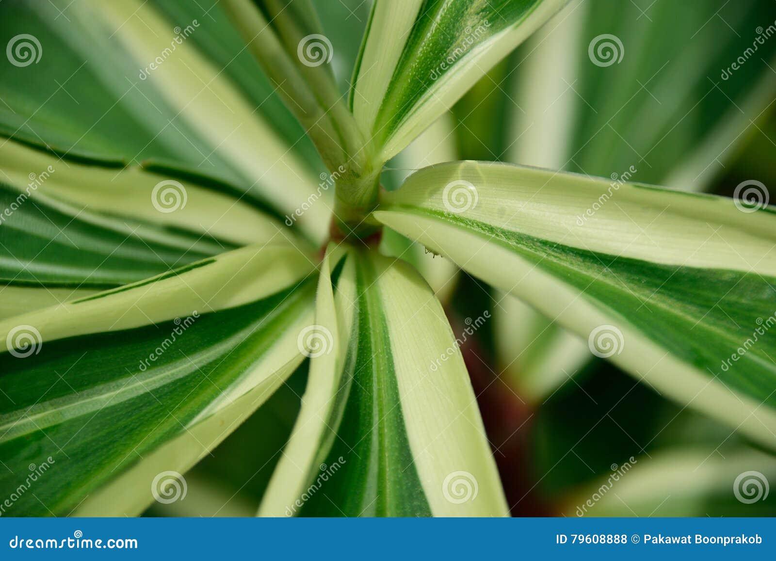 Folhas Mult-coloridas