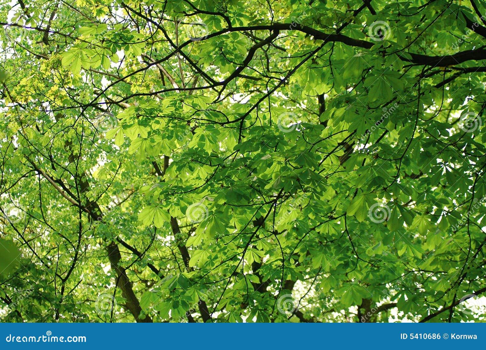 Folhas na árvore