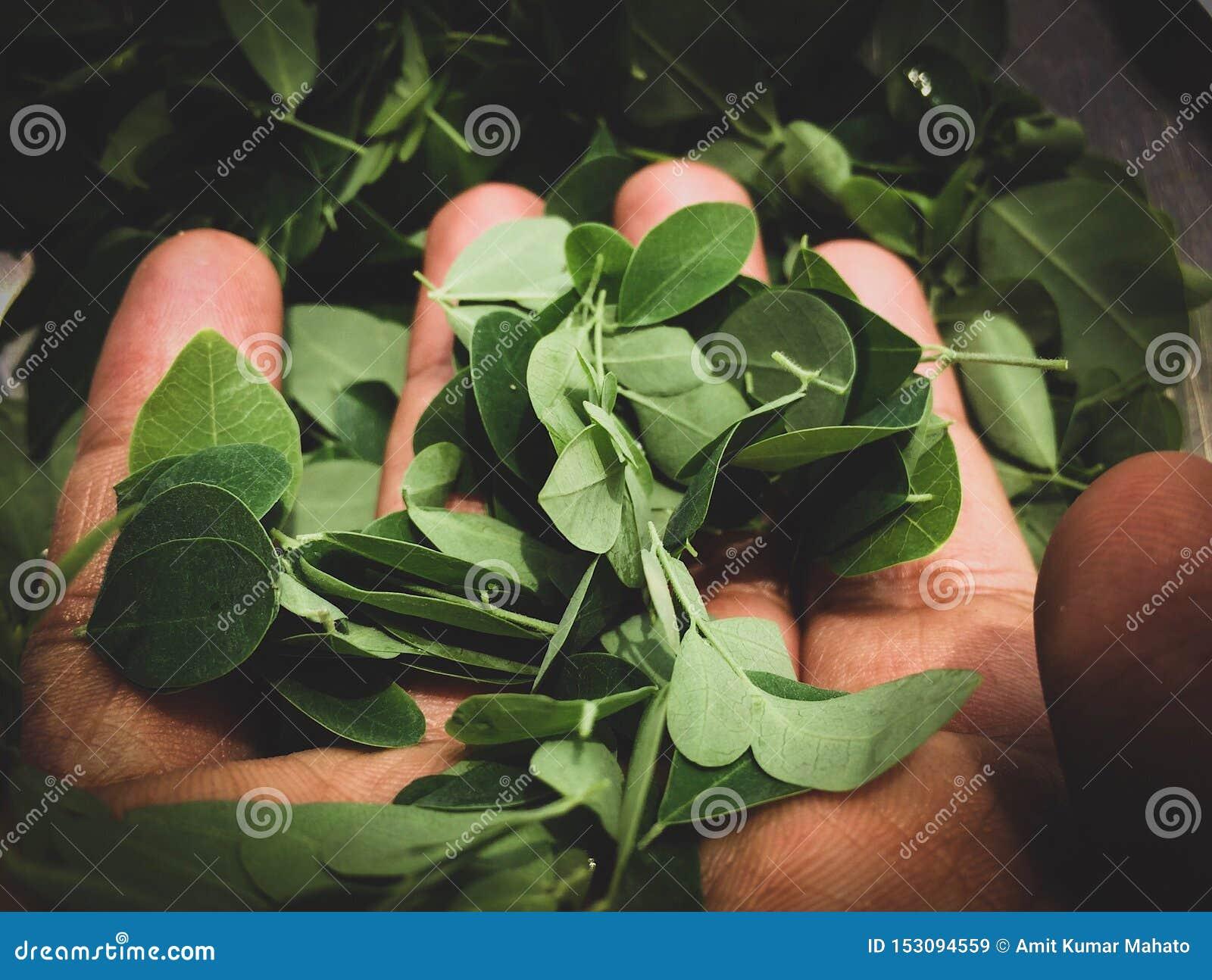 Folhas na mão Vá verde! Ambiente de salvaguarda, salvo nossa Mãe Terra