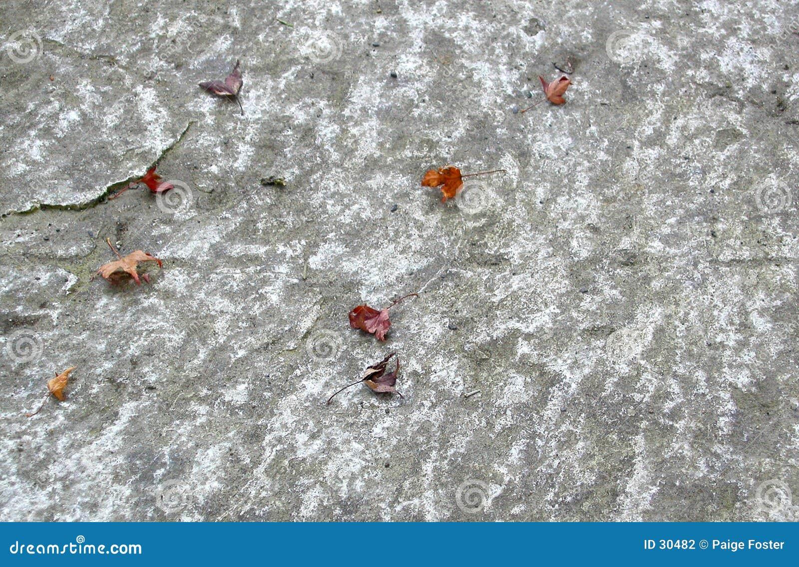 Folhas na pedra