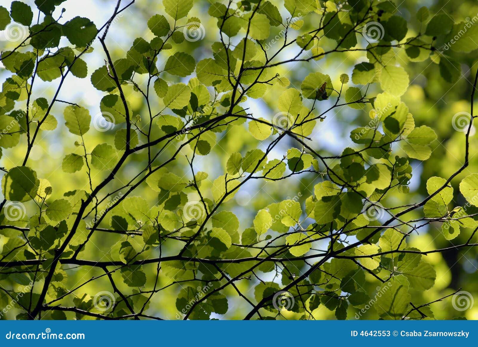 Folhas no luminoso