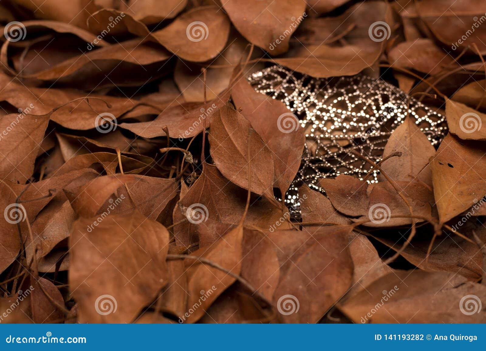 Folhas secas da árvore, entre cristais Simboliza a maturidade e a feminilidade