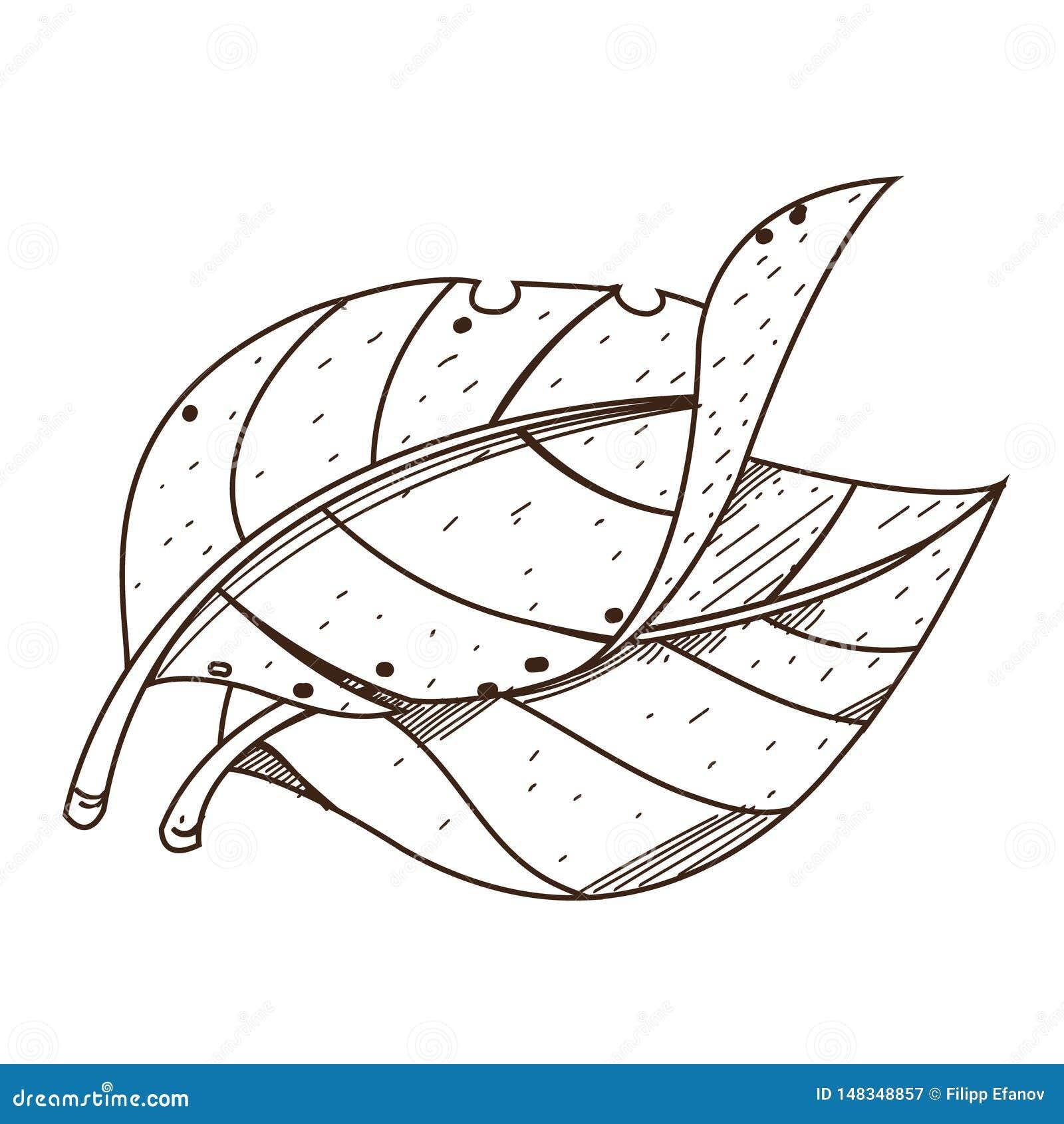Folhas Tabaco Desenho De Esboco Para Colorir No Tema De Plantas