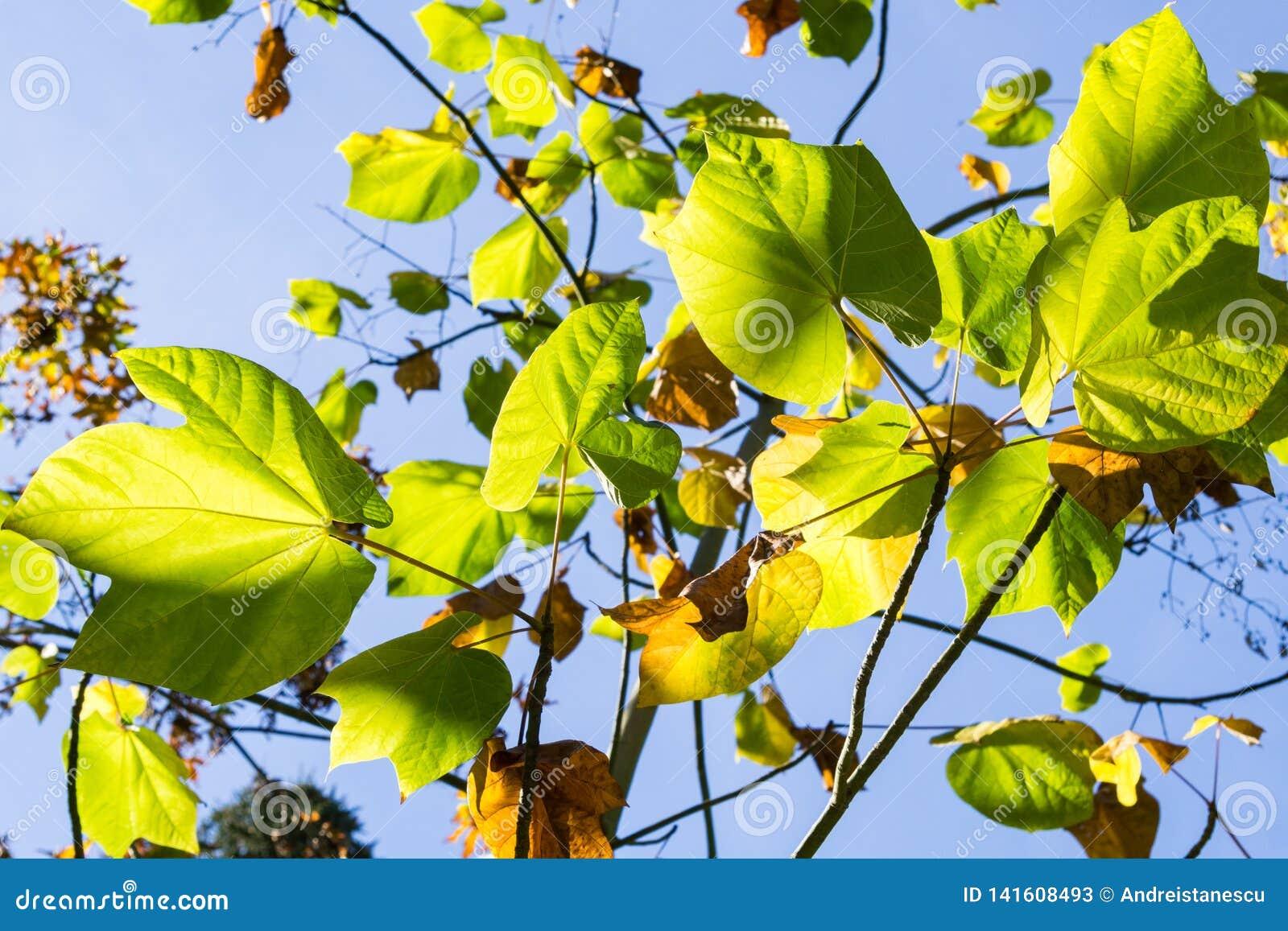 Folhas verdes em um fundo do céu iluminado pelo sol, Califórnia