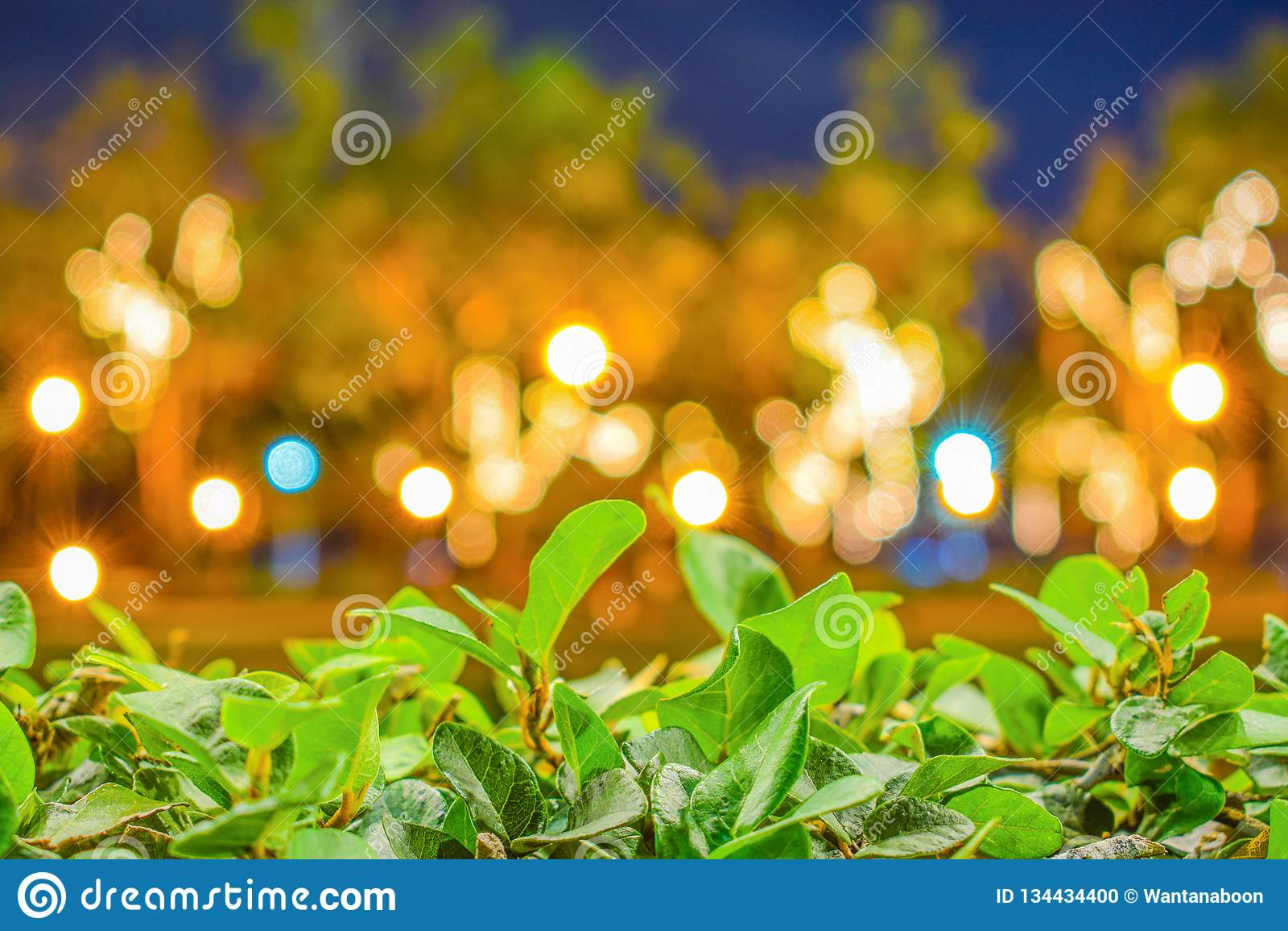 Folhas verdes na frente do fundo borrado de Bokeh