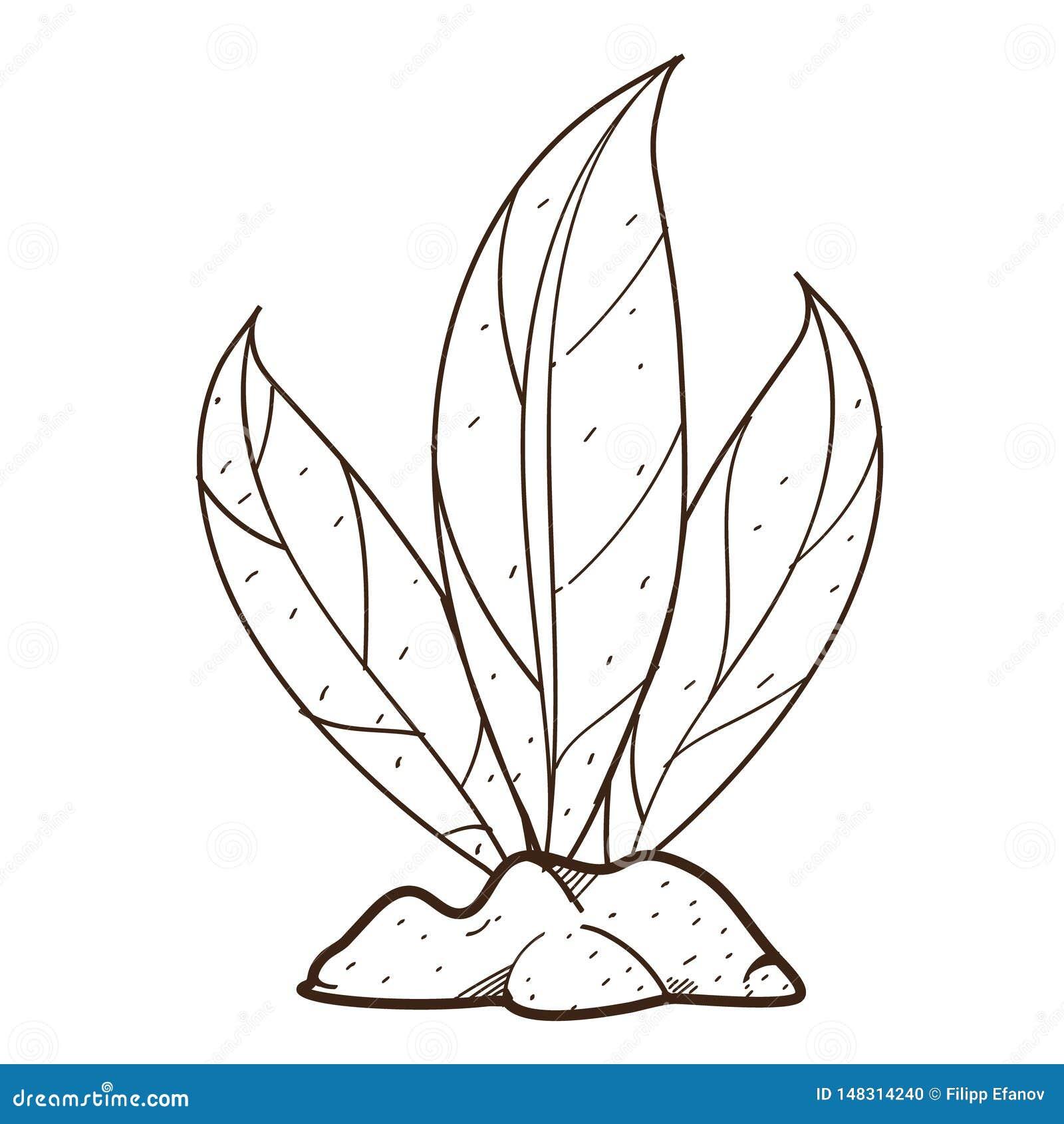 Folhas Verdes Planta Nos Arbustos A Terra Desenho De Esboco Para