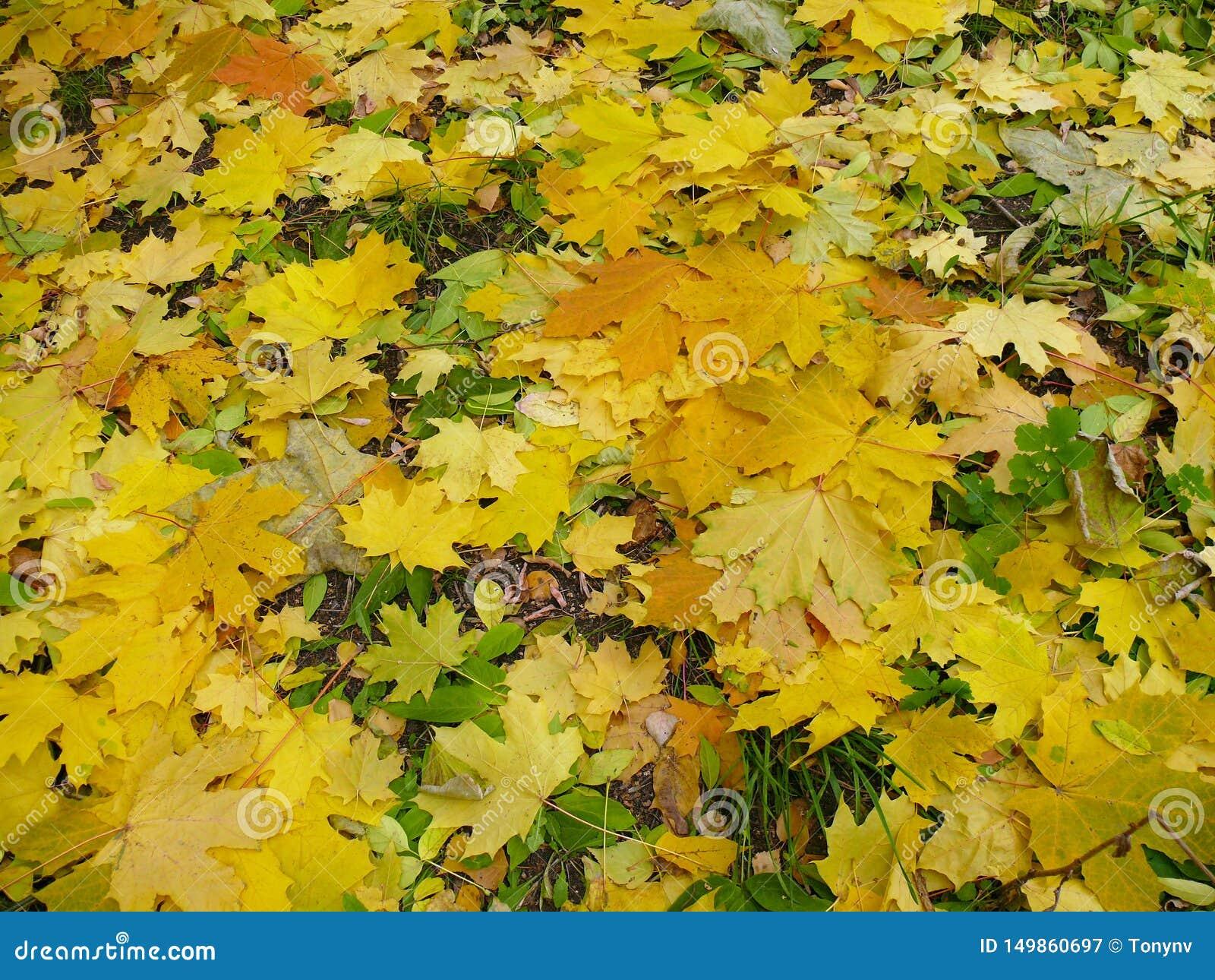 Foliage Folhas de outono verdes amarelas na terra