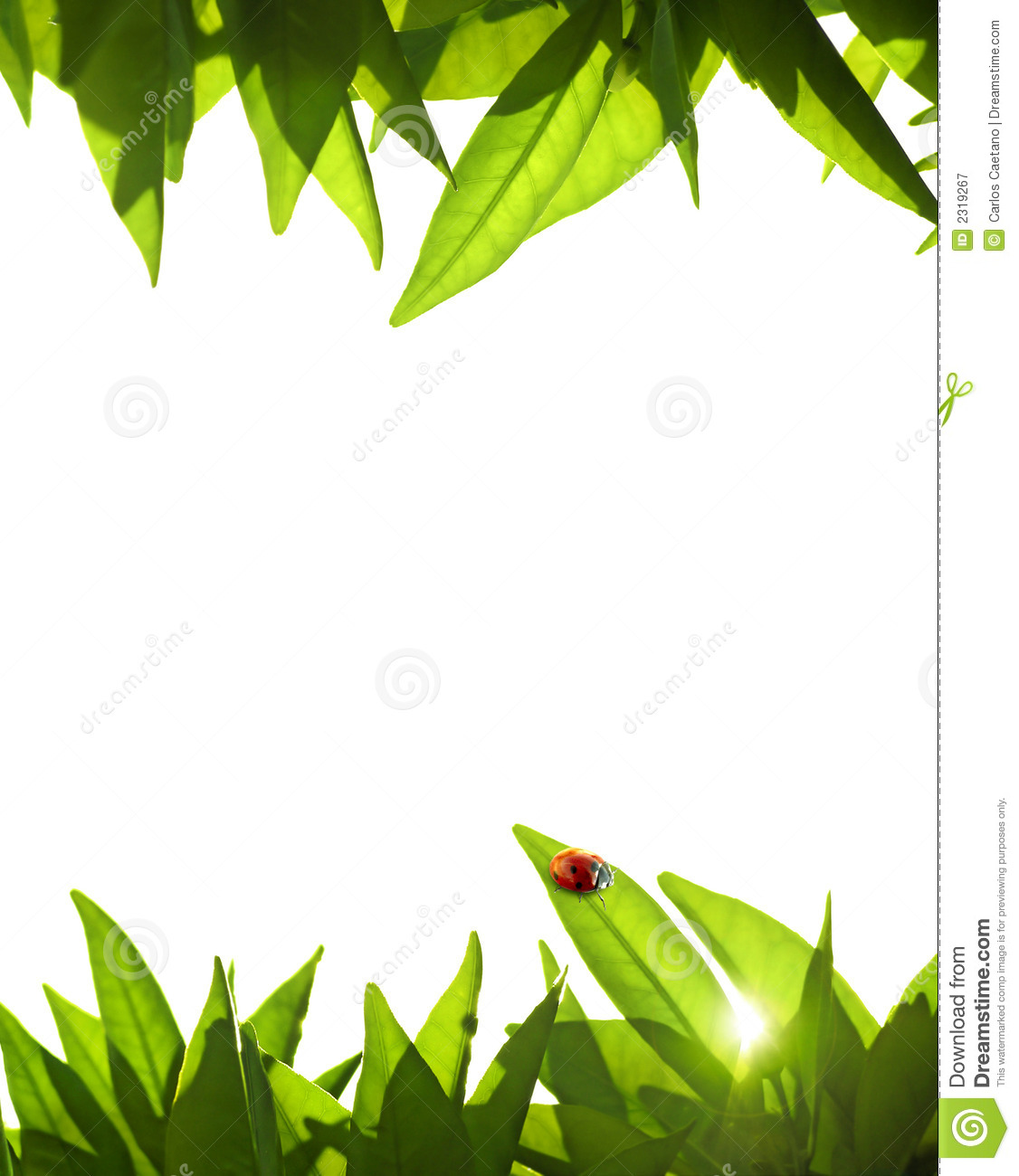 Foliage frame stock image image of embellish ornament 2319267 - Marcos para plantas ...