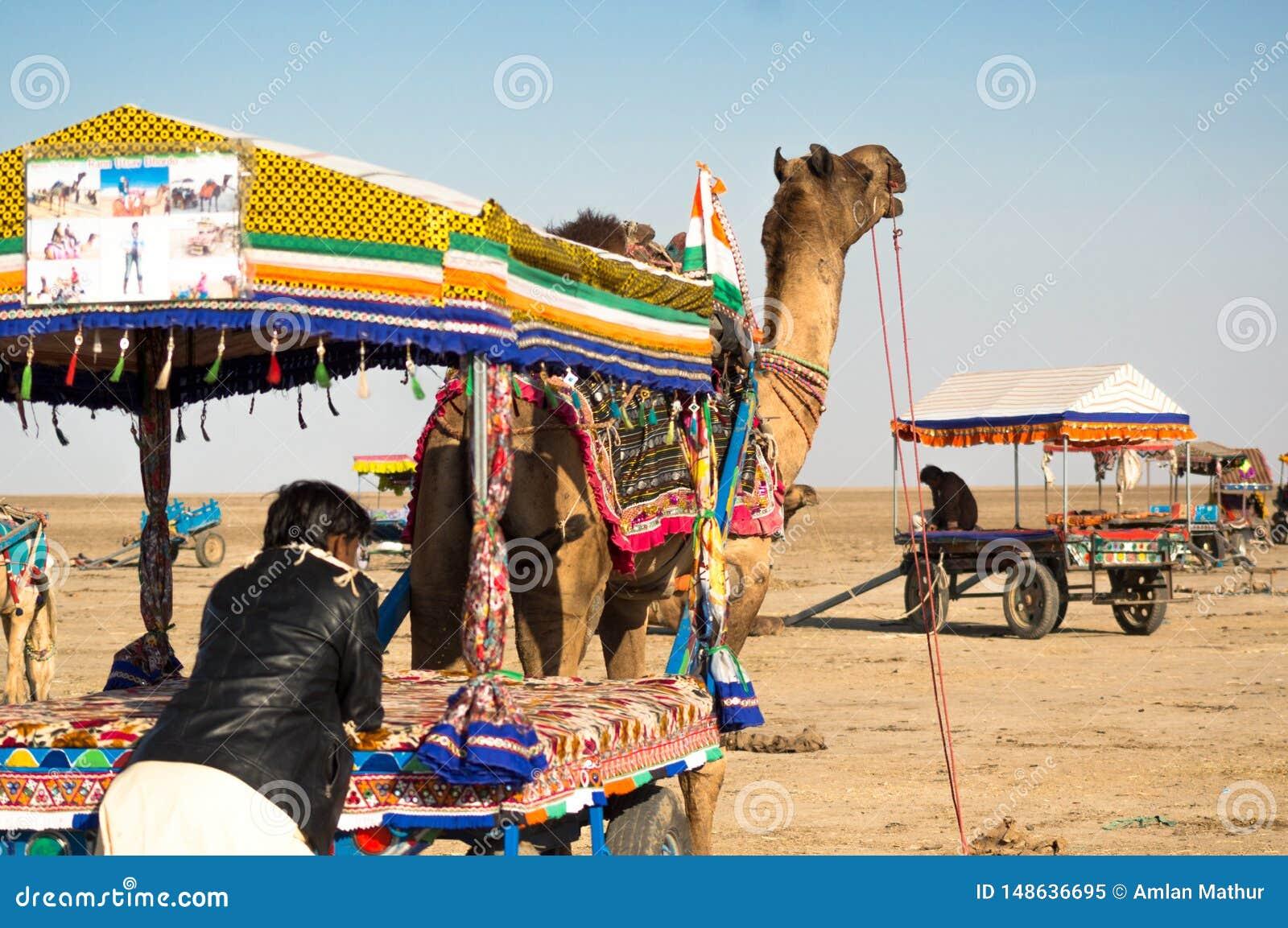Folk som får på färgrika kamelvagnar, som andra vagnar går i avståndet