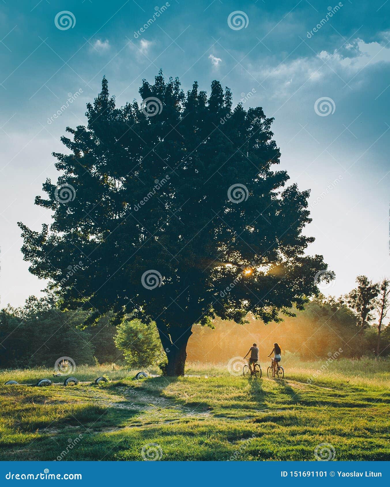 Folket rider en cykel på solnedgången med en sol ställde in under ett träd Natur