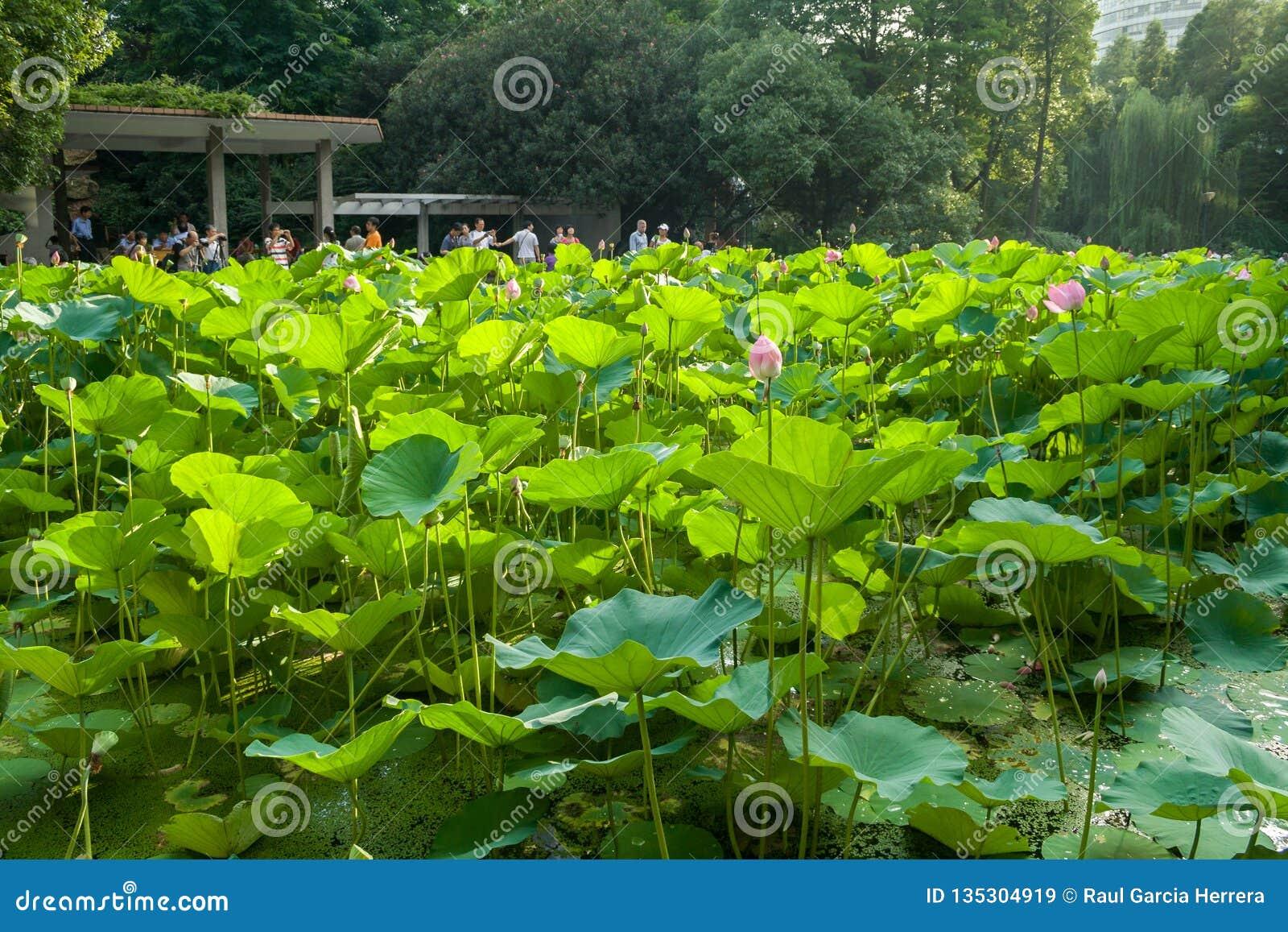 Folkpark i det Huangpu området av Shanghai Kina