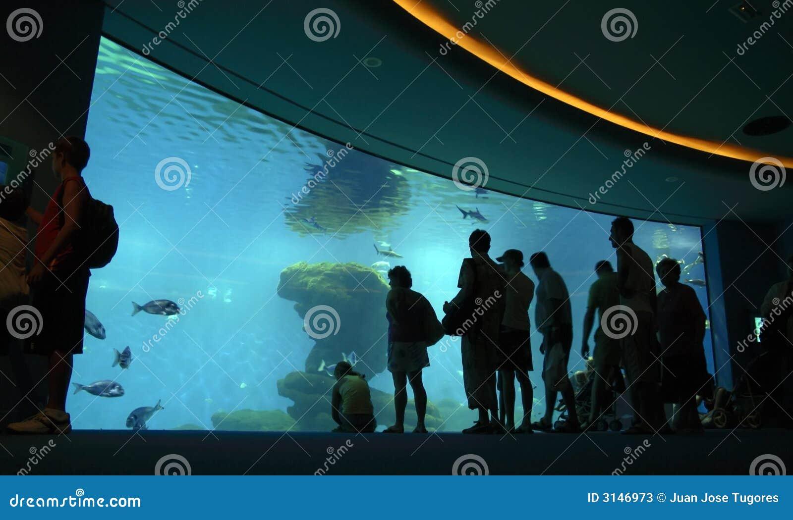 Folla che esamina acquario