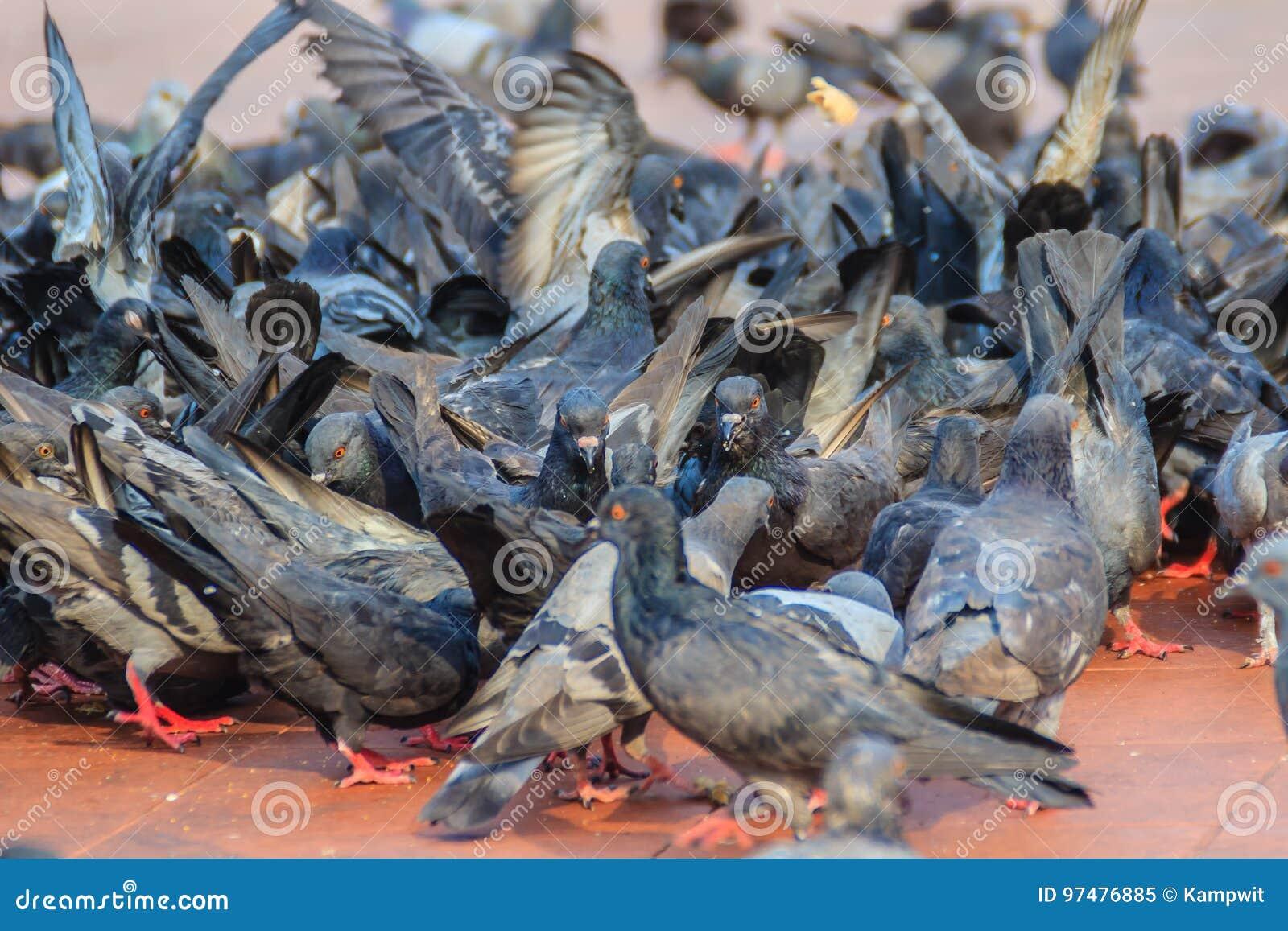 Folla del piccione sulla via di camminata a Bangkok, Tailandia sfuocatura