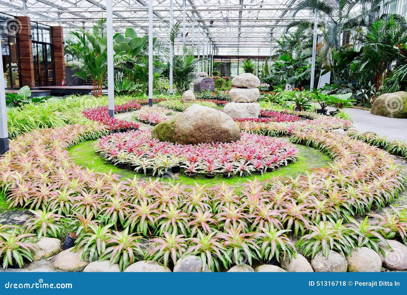 Follaje colorido hermoso en la planta de la bromelia for Follaje para jardin