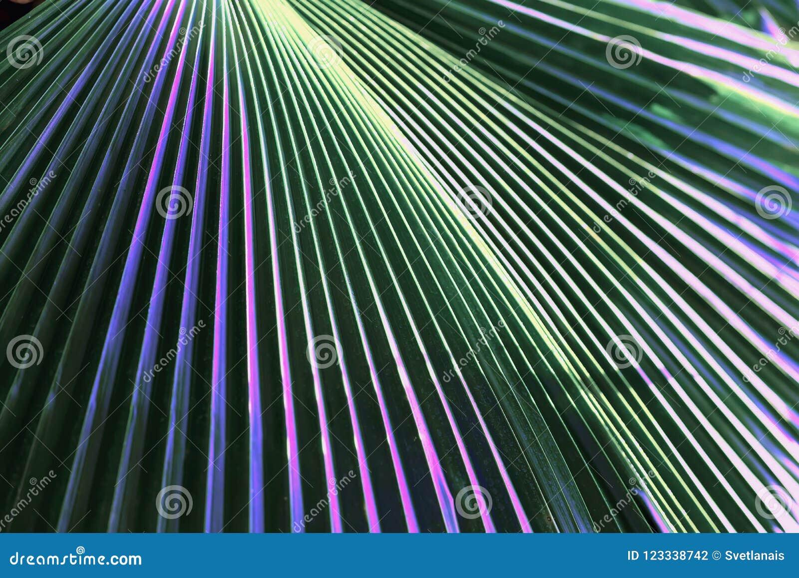 Follaje colorido ornamental, planta tropical con el color multycolored entonado de hojas Modelo abstracto, botánico exótico