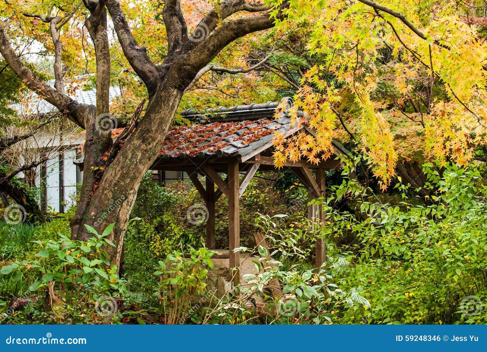 Follaje de otoño en Japón