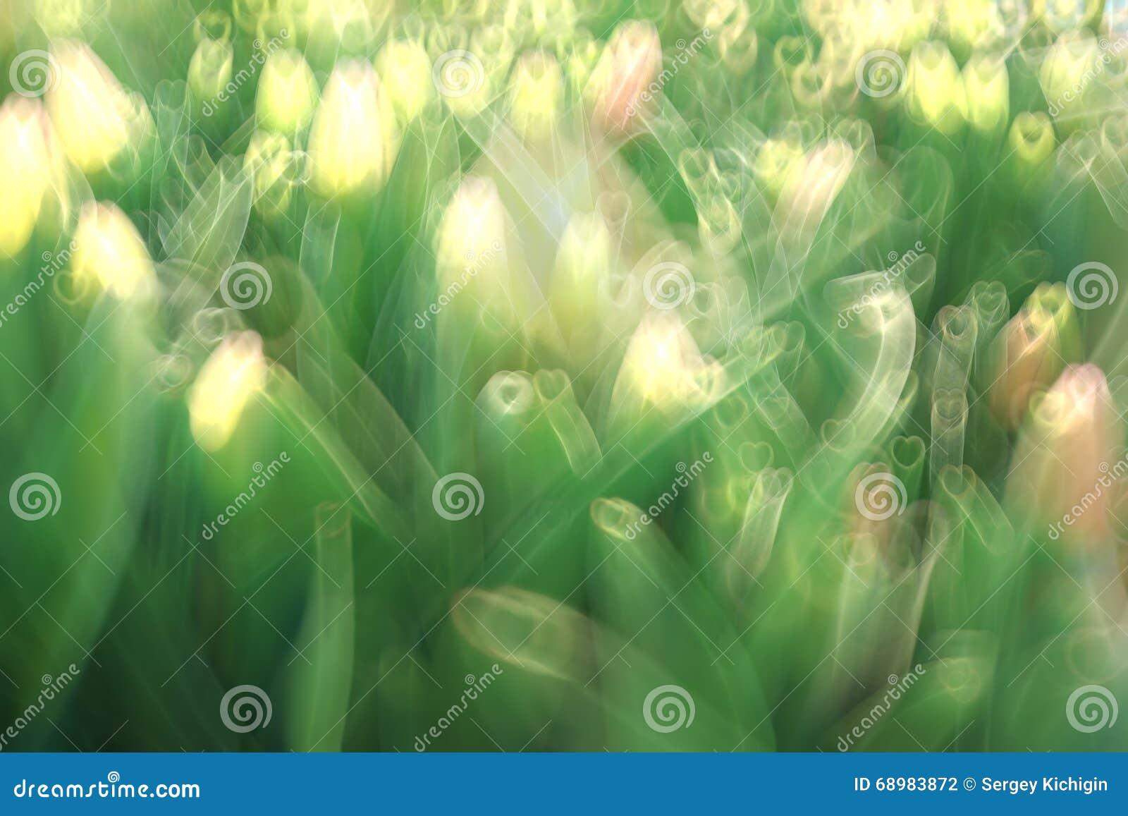 Follaje verde fresco de la primavera de la falta de definición