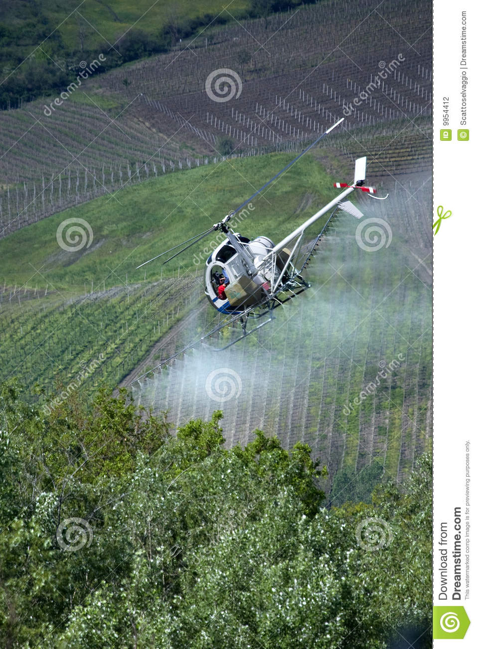 Following the spraying helicopter. Helicopter spraying pesticides. Chemical treatments by helicopter over the vineyards. Italy, Oltrepo pavese hills.