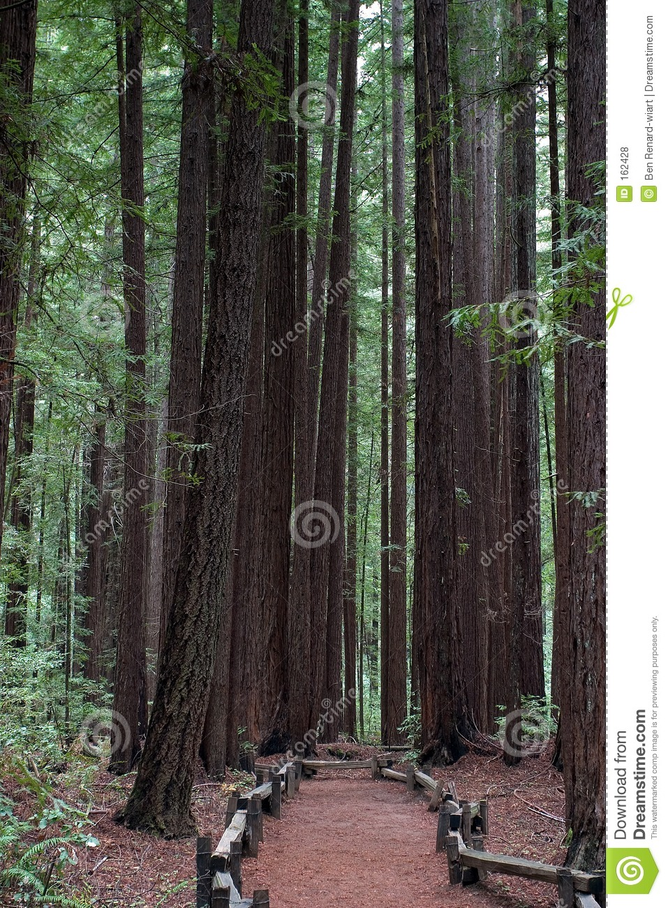 Following a trail in Armstrong Redwood Park.