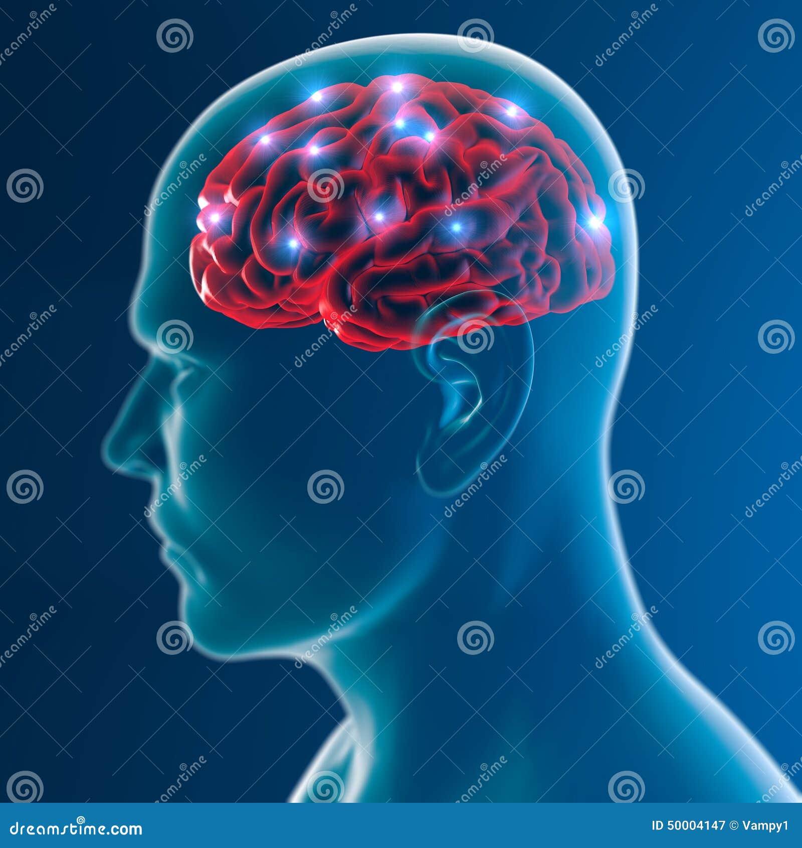 Fonctions de synapse de neurones de cerveau