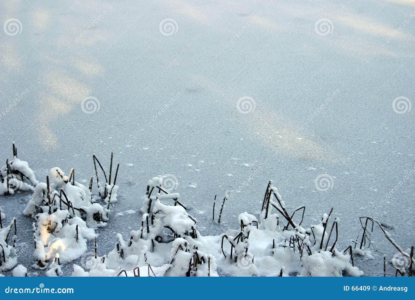 Fond 1 de l hiver