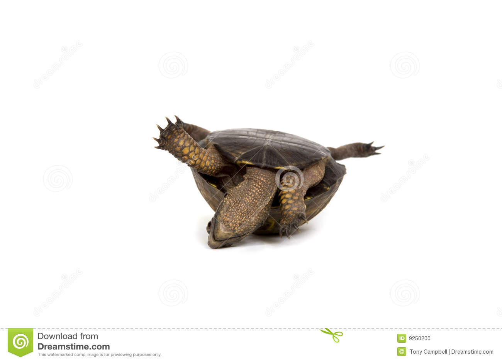 Fond arrière son blanc de tortue