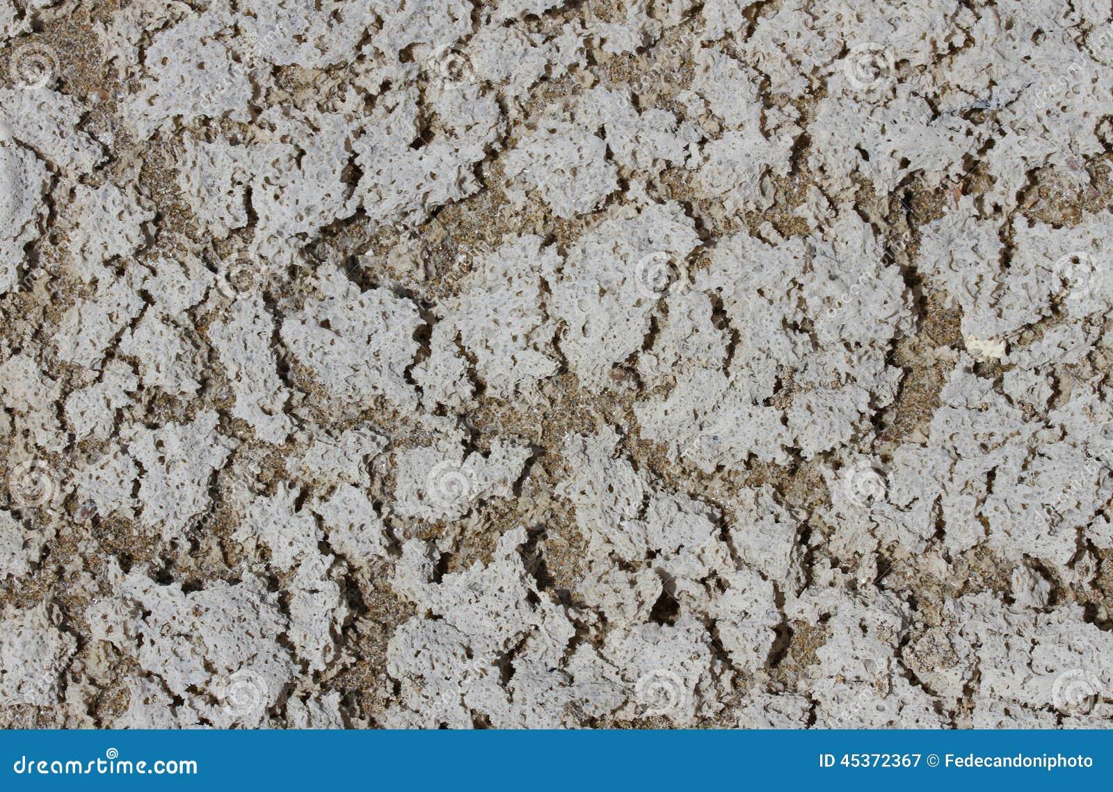 Fond avec le sable et le sel de plage