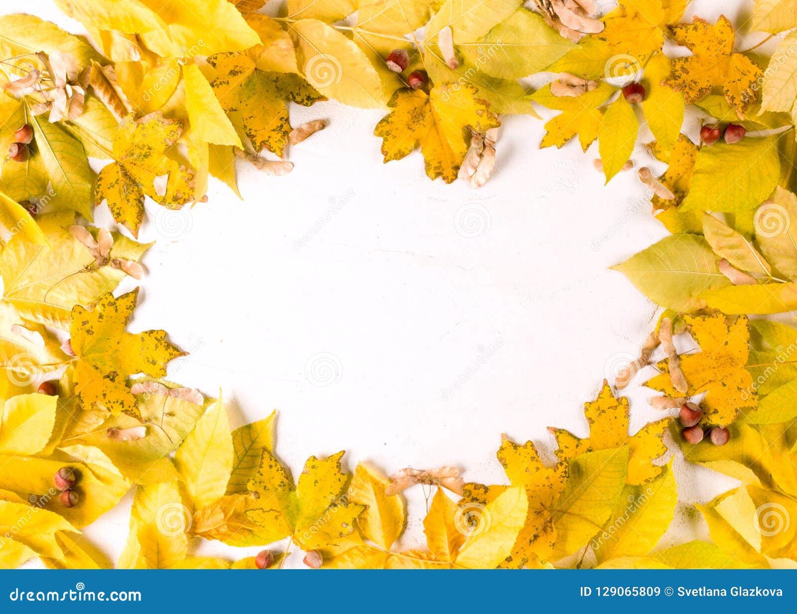Fond blanc ovale de la frontière n de cadre de feuilles d automne, vue supérieure, l espace de copie