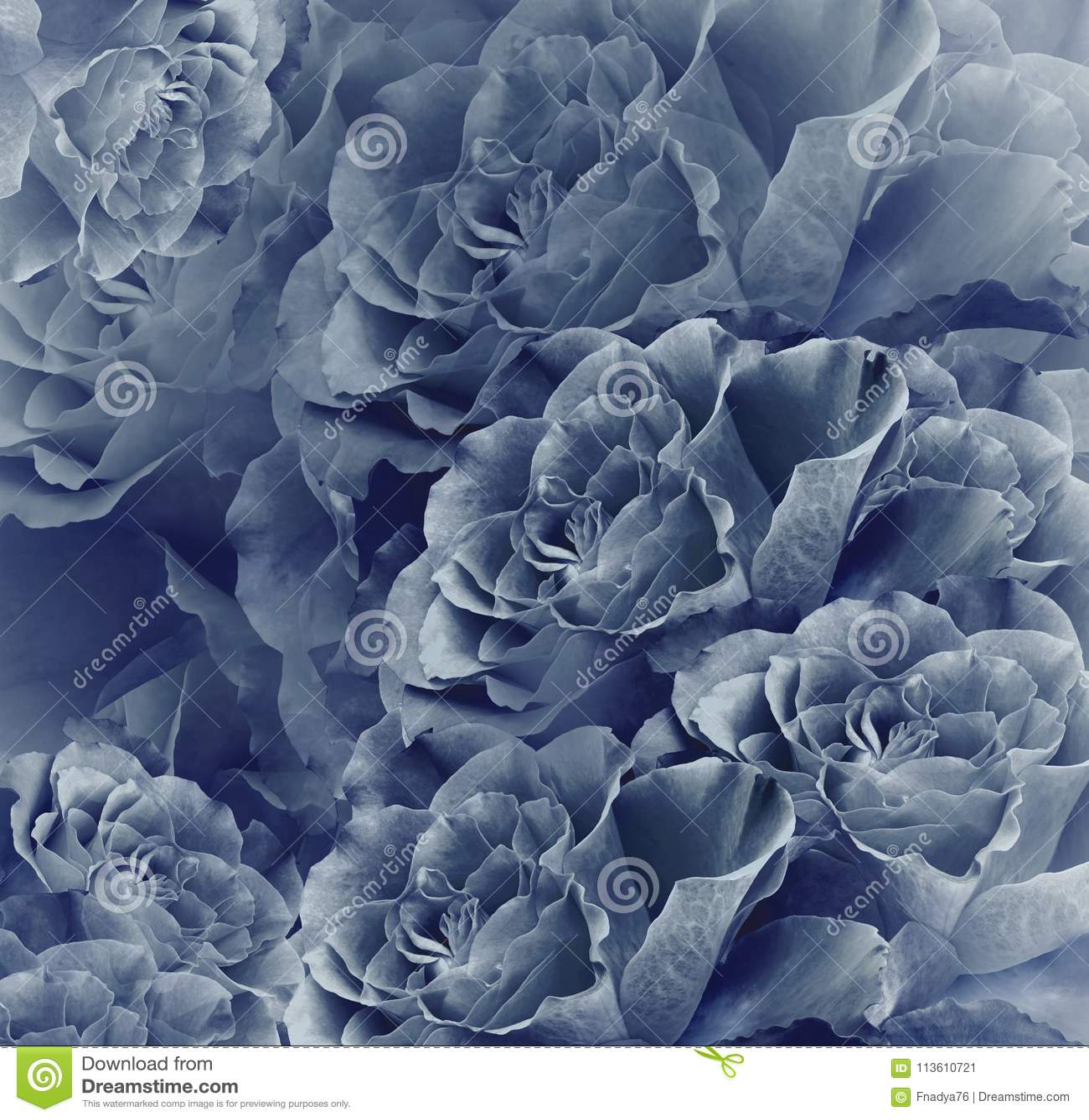 Fond bleu de vintage floral beau Composition de fleur Bouquet des fleurs des roses bleu-foncé Plan rapproché