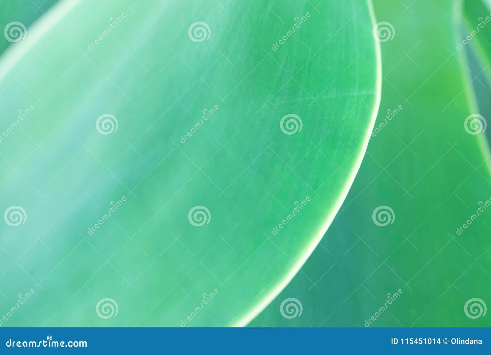 Fond botanique abstrait brouillé de nature Grande palmette vert clair élégante La verdure molle naturelle colorent Fond
