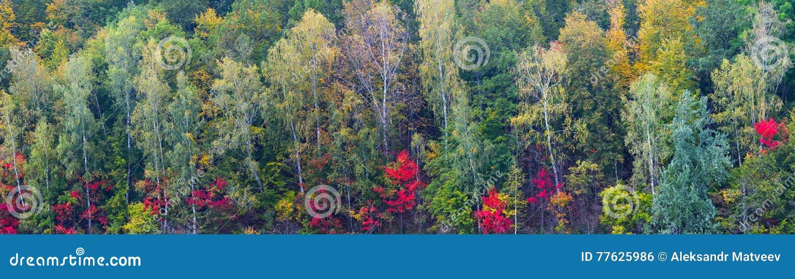 Fond coloré de panorama de feuillage de forêt d automne long grand