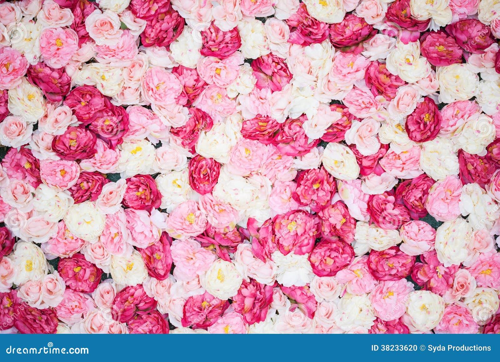 Fond complètement des pivoines blanches et roses