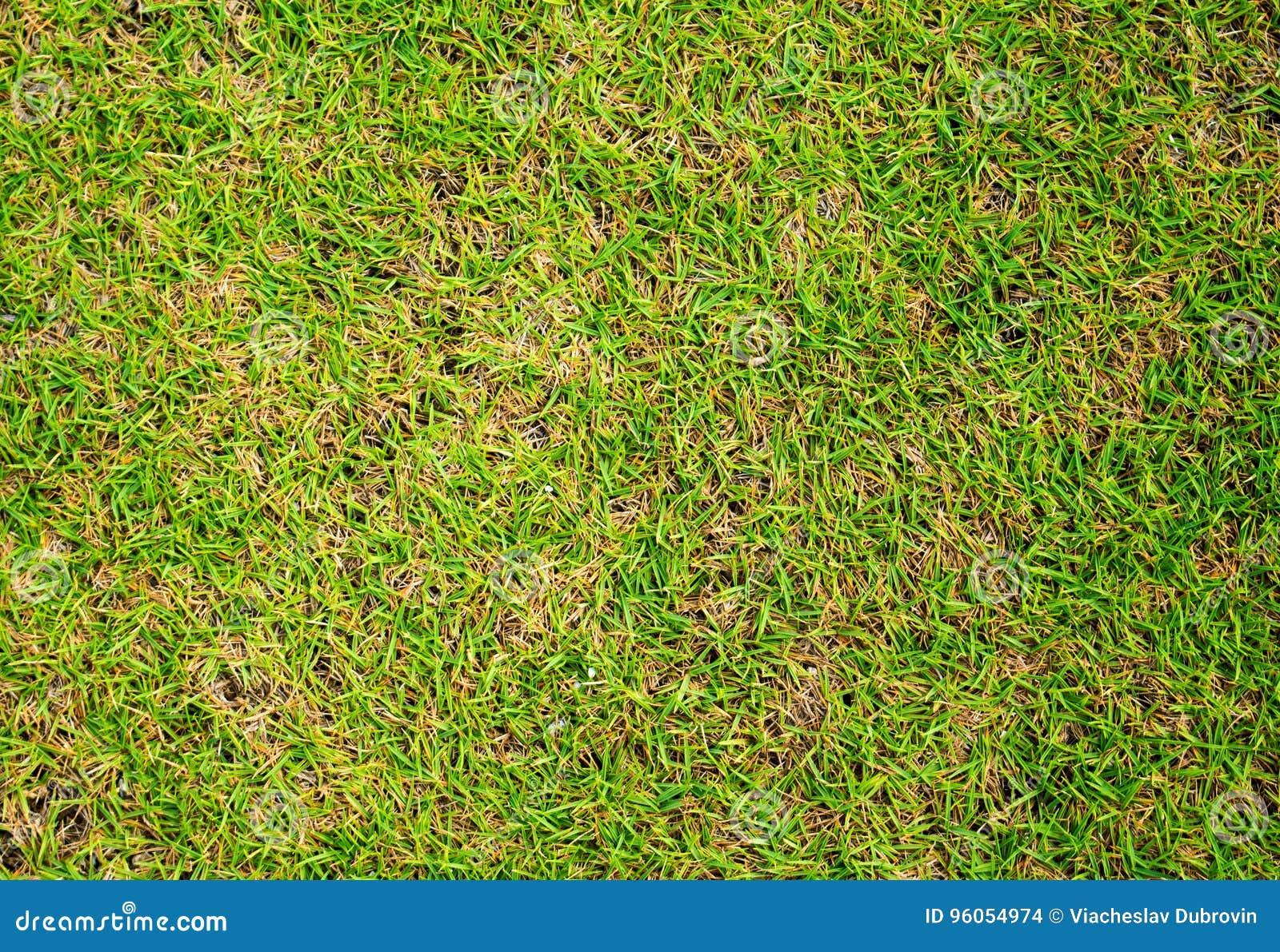 Fond court d herbe, fond de terrain de football d herbe verte, image en gros plan d herbe verte de ressort frais