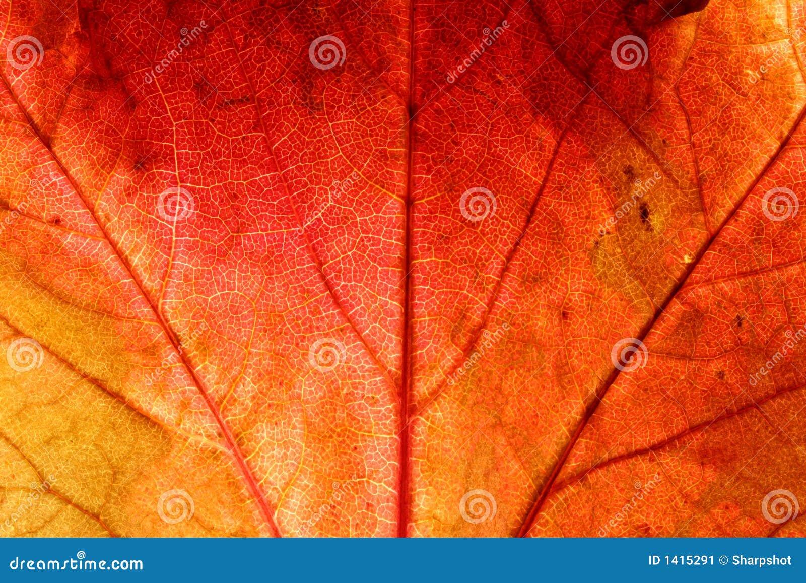 Fond d automne