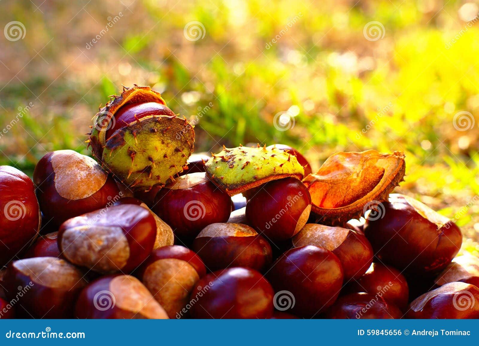Fond d 39 automne avec des marrons d 39 inde photo stock image 59845656 - Activite avec des marrons ...
