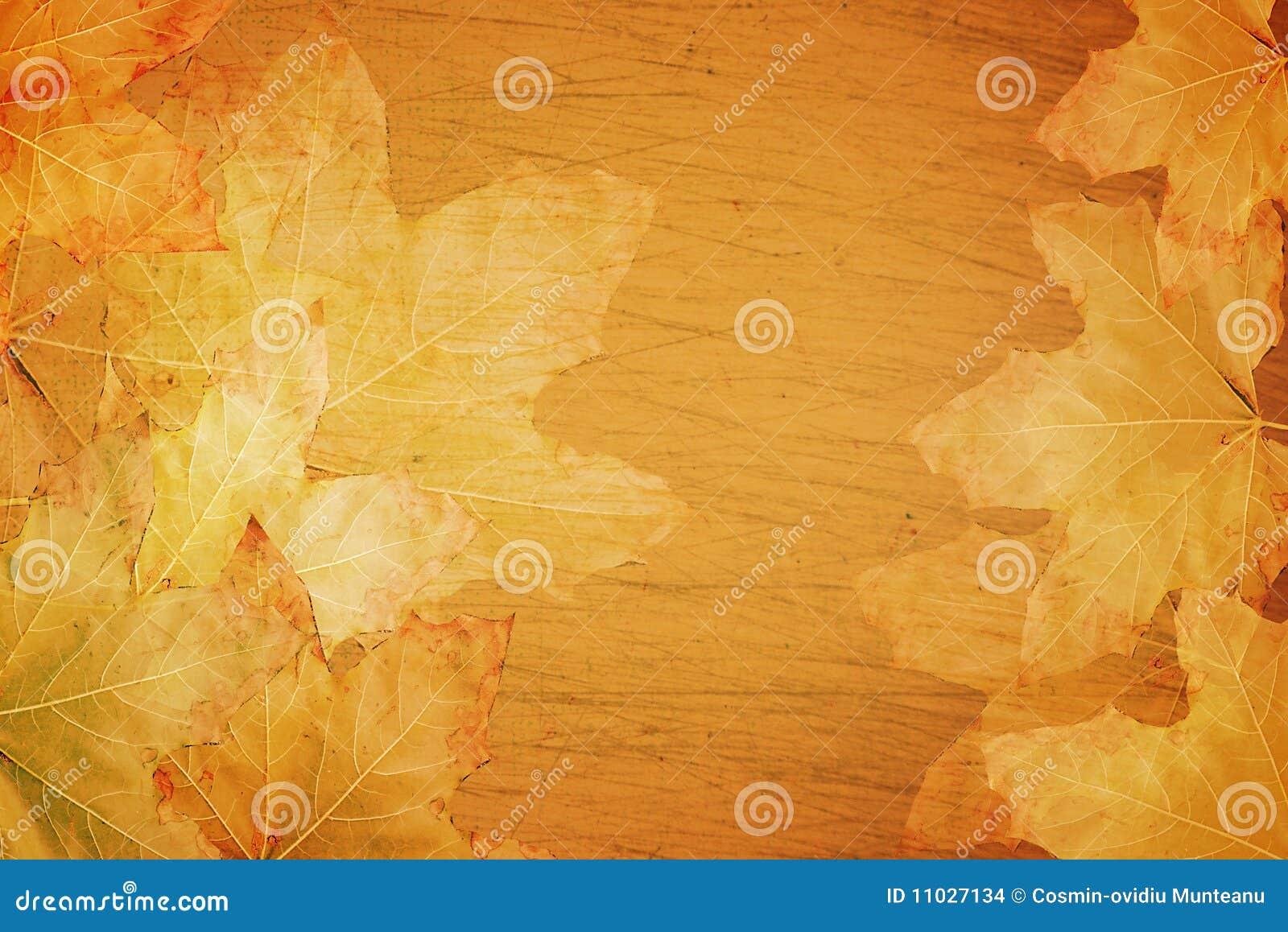 Fond d automne d automne